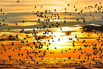 uccelli-tramonto